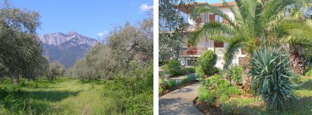 Маслинова градина, зад която е върхът, който трябваше да изкачим          Къща с градина в Потамия